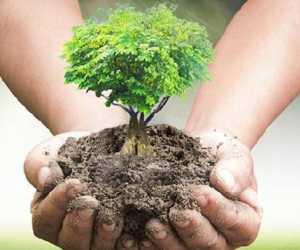 Lestarikan Hutan, BKPH Krueng Meurebo Tanam 500 Pohon