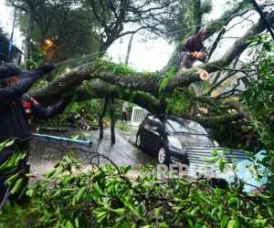 Seorang Mahasiswa AIN Tewas Tertimpa Pohon Saat Nongkrong di Warung