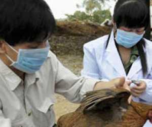 Virus Corona Belum Teratasi, China Kembali Diserang Wabah Flu Burung