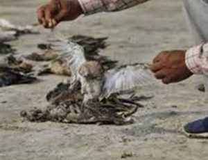 Heboh, Penemuan Bangkai Burung Berusia Sekitar 46.000 Tahun