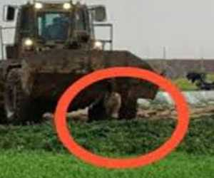 Biadab! Setelah Ditembat, Mayat Warga Palestina Diseret Pakai Buldozer