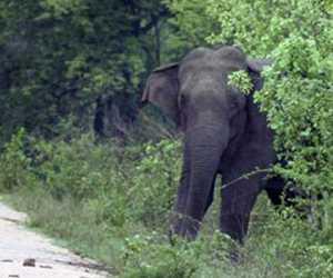 Sering Masuk Perkampungan, Warga Minta Pemerintah Tangani Gajah Liar
