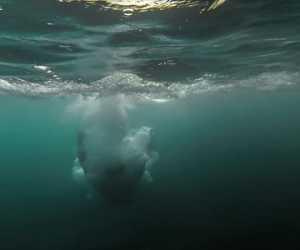Tenggelam di Kolam Galian C, Lima Santri dan Seorang Kiai Meninggal Dunia