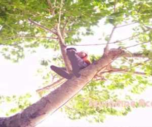 Mahasiswa Simelue Terpaksa Kuliah Diatas Pohon, Ini Penyebabnya