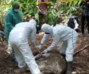 Anak Gajah Ditemukan Mati di Aceh Jaya
