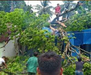 Rumah Tertimpa Pohon, Empat Warga Nagan Dilarikan ke Rumah Sakit