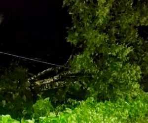 Kepala PLN Rayon Blangpidie, Pohon Rambutan Sebabkan Dua Tiang Listrik Tumbang di Abdya