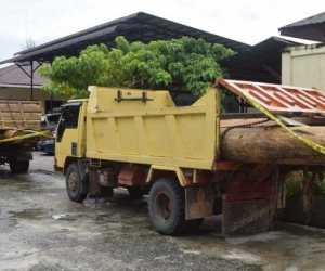7 Tersangka Illegal Logging di Nagan Raya Berhasil Diamankan