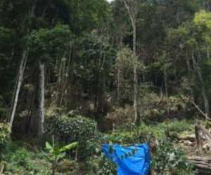 Pelaku Penebangan Hutan Gunung Gurunte Aceh Tengeh Berhasil Ditangkap