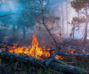Polisi Periksa Tiga Saksi Terkait Tujuh Hektare Lahan di Nagan Raya Terbakar