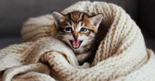Pelihara Kucing Namun Wanita Ini Dimasukkan Ke Neraka