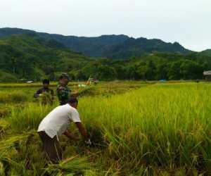 Suhaimi Salihin, Dambakan Samadua Jadi Pilot Project Pertanian di Aceh Selatan