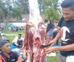 Pakar: Daging Qurban tak Berisiko Tularkan COVID-19