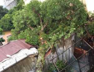 Satu Unit Rumah Warga di Abdya Rusak Berat Setelah Tertimpa Pohon