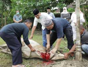 Aksi Mengejutkan! Pria Tua Ini Minum Segelas Darah Sapi Qurban