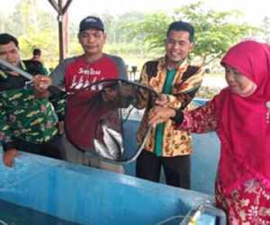 Kadis DKP Simeulue Lakukan Pendederan Benih Ikan