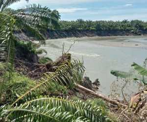Erosi Krueng Babahrot Mengganas Ratusan Hektar Lahan Sawit Warga Terancam