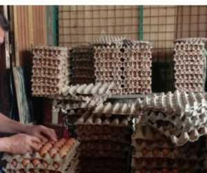 Dalam Sepekan Terakhir Harga Telur Ayam Melonjak Tinggi