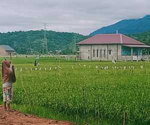 Petani di Abdya Kewalahan Hadapi Serangan Hama Burung Pipit