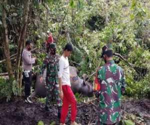 Seekor Gajah Betina Ditemukan Mati di Bener Meriah