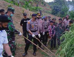 Tim Gabungan TNI-Polri Musnahan Lima Hektare Ganja