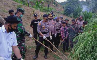 Tim Gabungan TNI-Polri Musnahan Lima Haktare Hanja