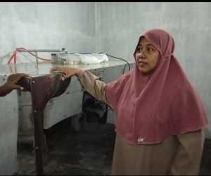 Dampak Pandemi, Omset Usaha Daun Kelor di Aceh Jaya Menurun Drastis