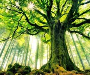 Inilah Kalimat Yang Setara Dengan Satu Pohon di Surga