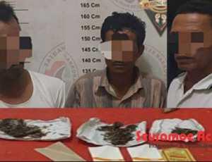 Ganja Marijuana, Antar Tiga Pria Simeulue ke Penjara