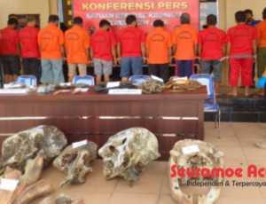 11 Pelaku Pembunuh Gajah di Aceh Jaya Ditangkap Polisi