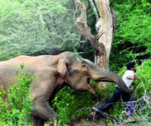 Kawanan Gajah Liar Mengamuk, Dua Warga Jadi Korban