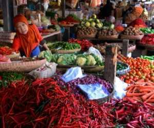Harga Anjlok, Petani Cabai di Samatiga Aceh Barat Mengeluh