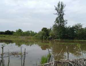 Banjir Rendam Puluhan Hektare Sawah Warga di Abdya