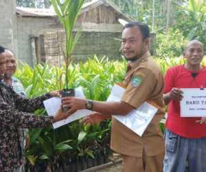 74 Kelompok Tani Terima Bibit Pinang Dari Dinas Pertanian Abdya