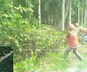 Kabel Hitam Milik PLN di Abdya Ancam Keselematan Warga