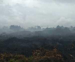 Enam Hektare Lahan Gambut di Samatiga Aceh Barat Terbakar