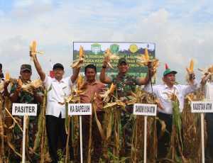 Dandim Aceh Timur Panen Jagung Perdana