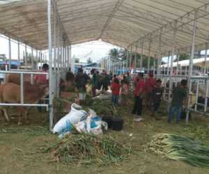 Dirjen dan Plt Gubernur Aceh Dijadwalkan Hadir di Acara Expo Ternak di Abdya