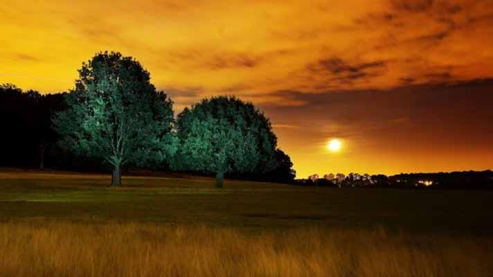 Pohonpun Ikut Tidur Di Malam Hari