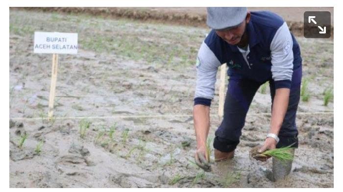 Bupati Aceh Selatan Laksanakan ProgramTanam Serentak