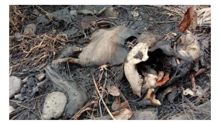 Di Aceh Konflik Manusia dan Satwa Liar Masih Tinggi