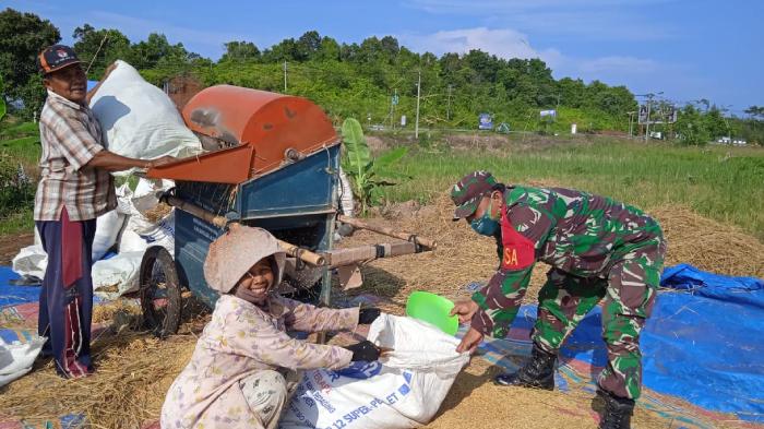 Dedikasi Untuk Petani, Serda Kusmono 'Nyambi' Rontokkan Padi