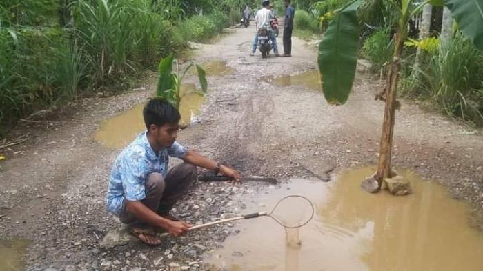 Tak Kujung Diperbaiki, Pemuda Aceh Selatan Tanam Pisang di Badan Jalan