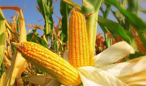 Mantan Kepala Dinas Pertanian Ditetapkan Sebagai Tesangka